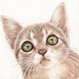 A capricious cat 2