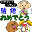 Congratulations sticker of Toy Poodle