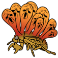 Trembling cicada - Cordyceps sinensis -