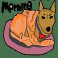 Allen, a mixed dog