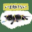 Sumi cat