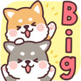 fluffy fat Shiba Big Sticker