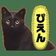 シャムトラと黒猫双子猫