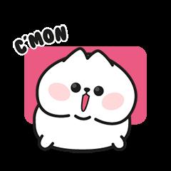 Cute White Chubby Cat