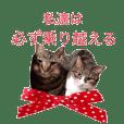 猫にゃ・にゃ・にゃ!part12