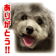 Oreo stamp ver1