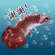 Arowana Chinese version