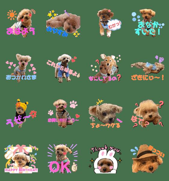 「伊藤家の愛犬ぺこちゃんスタンプ2」のLINEスタンプ一覧