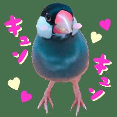 ヲタクな文鳥と恋する乙女たち