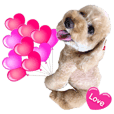 Toypoo Coco Lovely 9