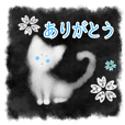 Sumi white cat