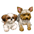 Yorkshire Terrier and Shih Tzu