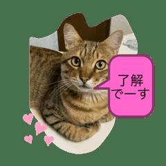 西塚家のニャンズ+礼ちゃん