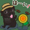 A sticker willingly. Black Pug's summer.