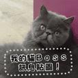我的貓Boss 訊息貼圖*初次登場!*