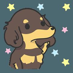 Dachshund named choco-chan