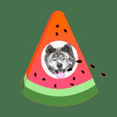 りゅうの家族スタンプ2(秋田犬)