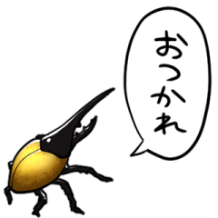 talking Hercules beetle