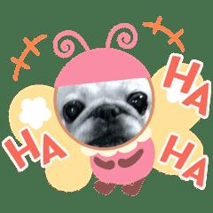 ブサかわ犬♡ハナちゃんと幸せ♪えりおです
