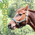 Horse Trekking Farm Miurakaigan Sticker