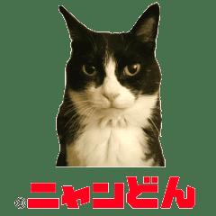 弁 猫 鹿児島 しゃべる