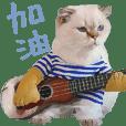 Wini Cats