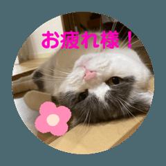 cat tubu_20200807200551
