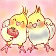 オカメインコの、りんごちゃんとお友達2