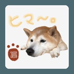 Yamada san_20200809083619