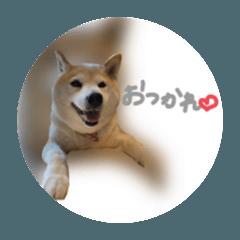 Yamada san_20200809084301