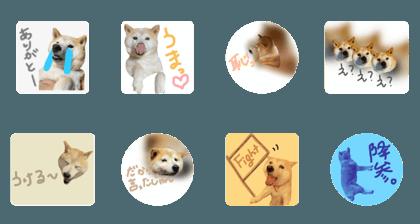山田さん家の凛ちゃん part.4