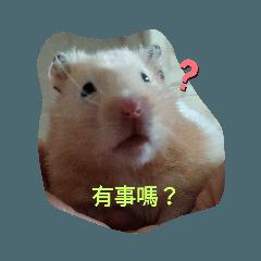 倉鼠{牛奶}2