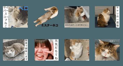 shinji_20200811220949