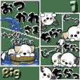【Big】シーズー犬『コロナの夏』1