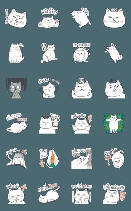 FAT CATT