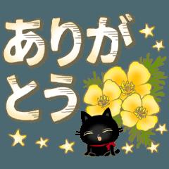 A kitten of a black cat 3