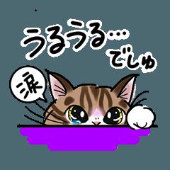 TAROFUKUCOCORON stickers
