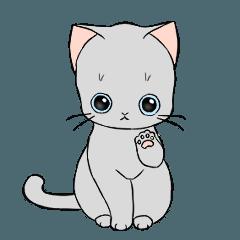 Street cat/Grey cat