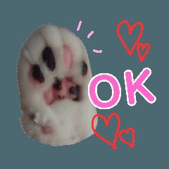 Cat paws Sticker * mimi