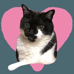 Black and white cat Honey daily sticker