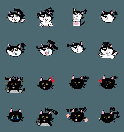 MY CATS - KIKI & LALA