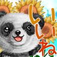 mohu panda summer
