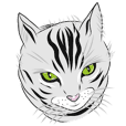 American Shorthair of cute cat