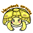 Hermanns tortoise sticker