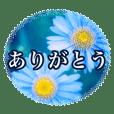 Minami Shidu_20200818081806