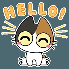 Wide Eyed Kitten