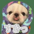 Pekingese named Pettan