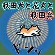 秋田犬と花火と秋田弁
