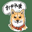 岡山弁 犬