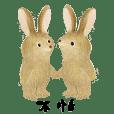 里山動物X臺灣野兔